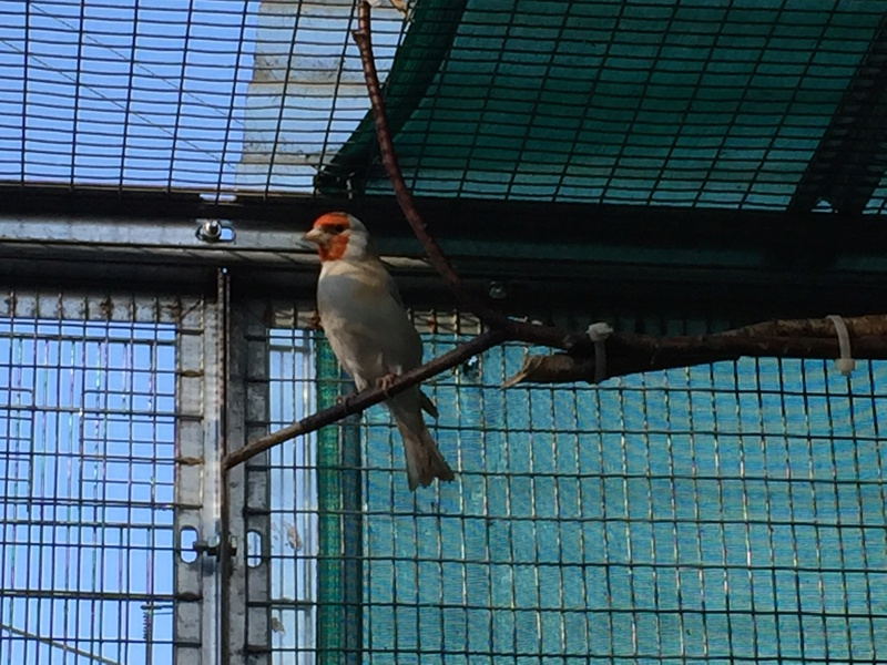 Mes oiseaux et mes installations d'élevage Img_0129
