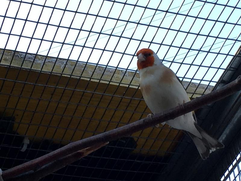 Mes oiseaux et mes installations d'élevage Img_0130