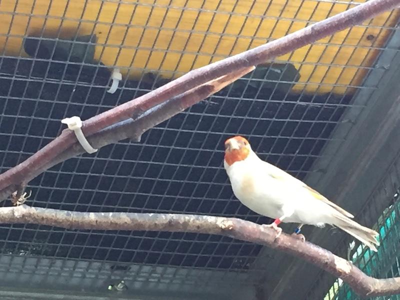 Mes oiseaux et mes installations d'élevage Img_0131