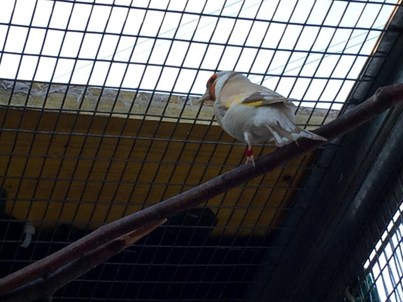 Mes oiseaux et mes installations d'élevage Img_0132
