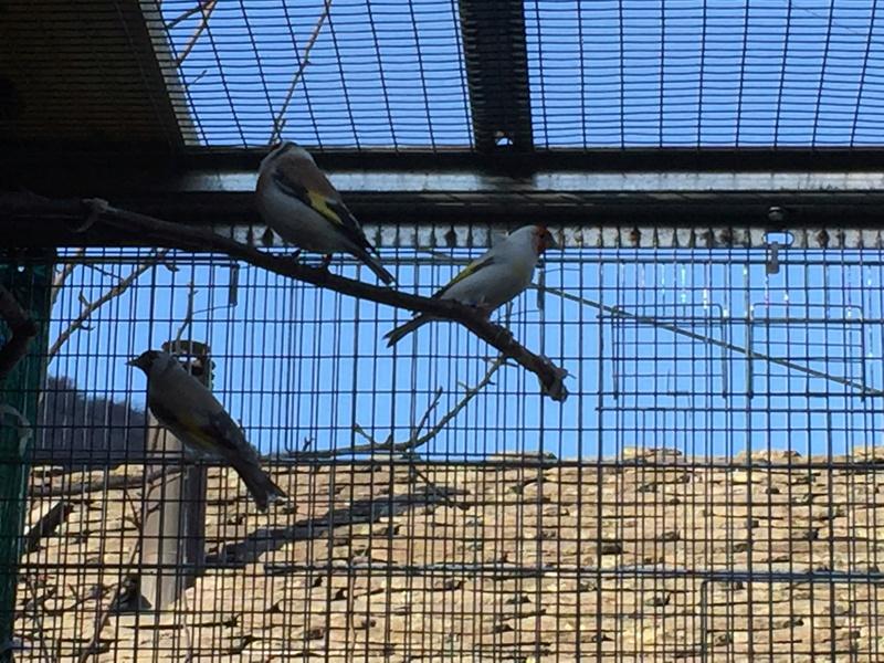 Mes oiseaux et mes installations d'élevage Img_0133