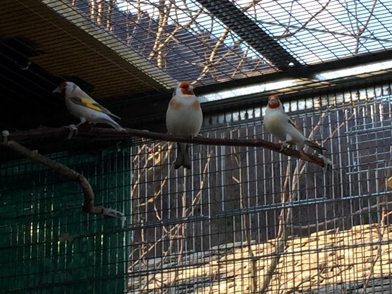 Mes oiseaux et mes installations d'élevage Img_0134