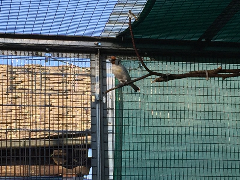 Mes oiseaux et mes installations d'élevage Img_0135