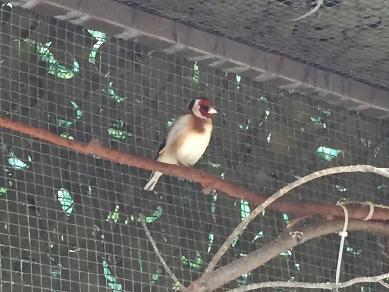 Mes oiseaux et mes installations d'élevage Img_0136