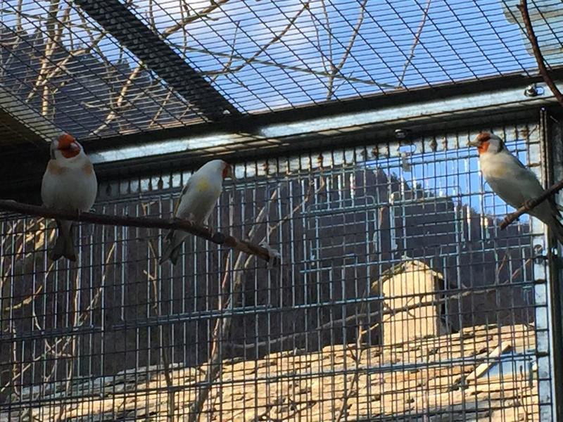 Mes oiseaux et mes installations d'élevage Img_0137