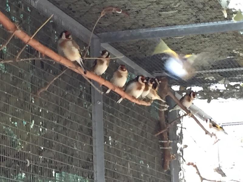 Mes oiseaux et mes installations d'élevage Img_0138