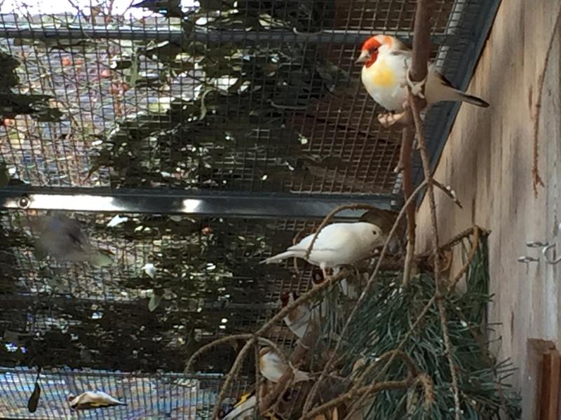 Mes oiseaux et mes installations d'élevage Img_0140