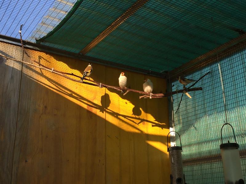 Mes oiseaux et mes installations d'élevage Img_0141