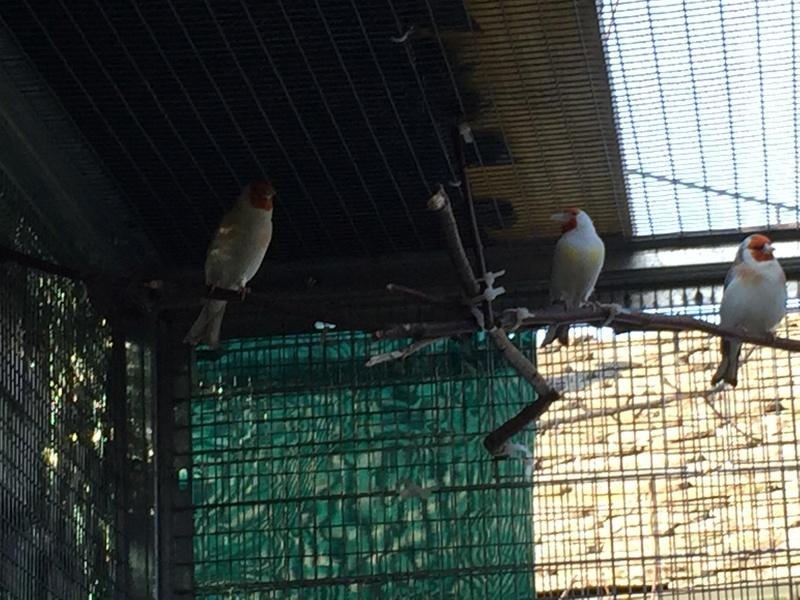 Mes oiseaux et mes installations d'élevage Img_0142