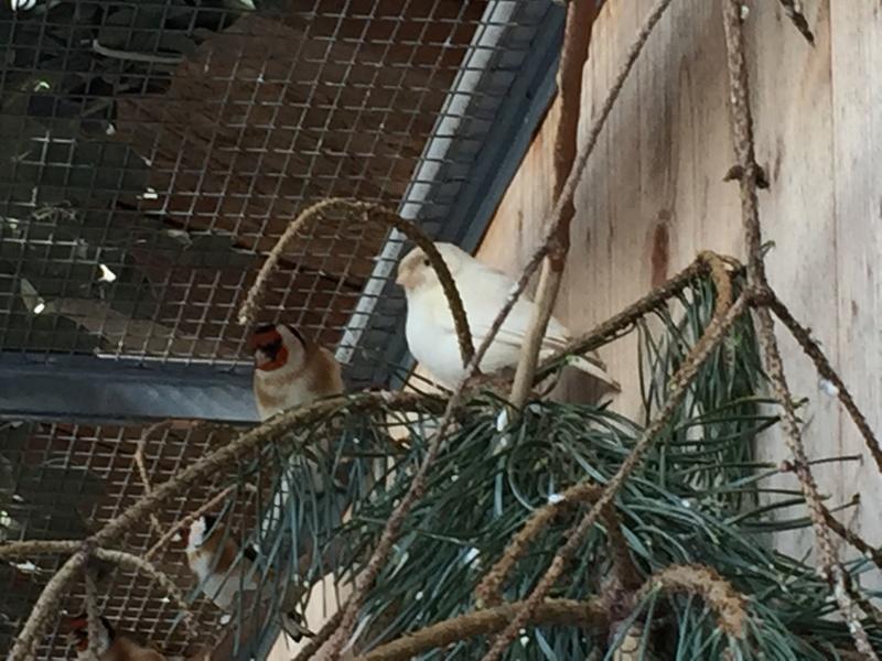 Mes oiseaux et mes installations d'élevage Img_0143