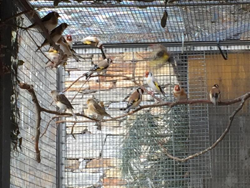 Mes oiseaux et mes installations d'élevage Img_0144