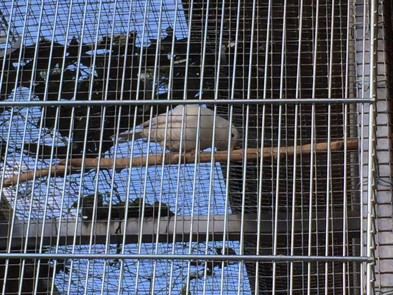 Mes oiseaux et mes installations d'élevage Img_0145