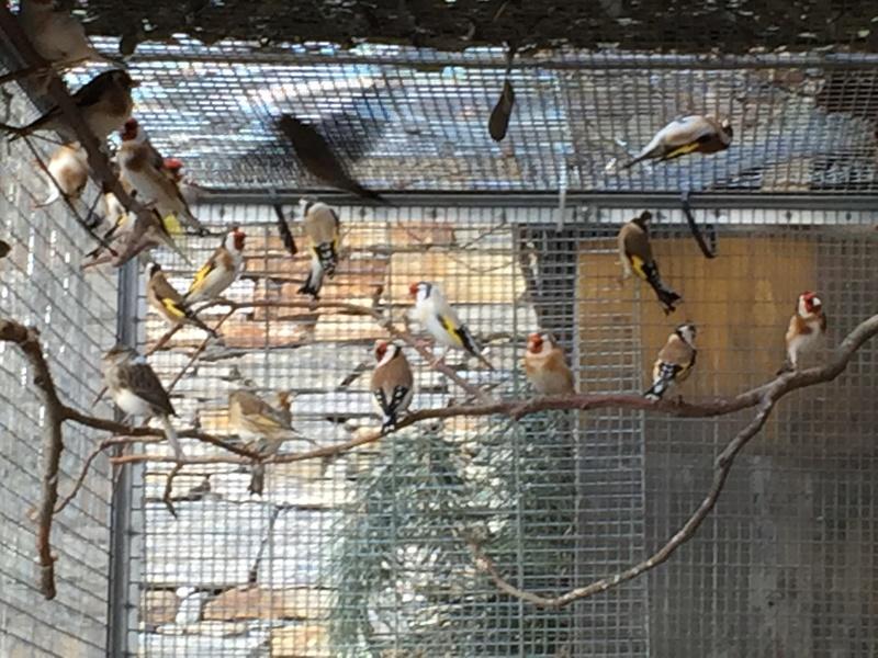 Mes oiseaux et mes installations d'élevage Img_0147
