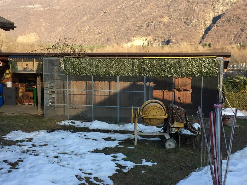 Mes oiseaux et mes installations d'élevage Img_0148