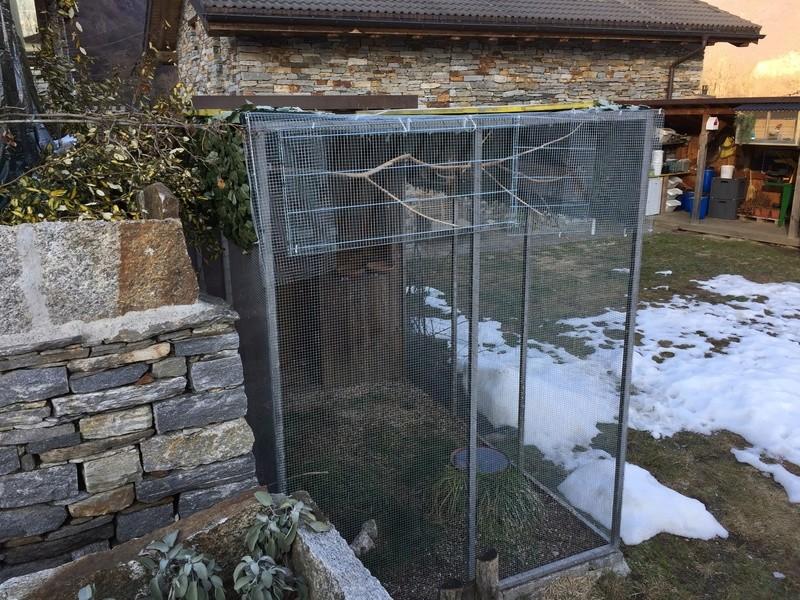 Mes oiseaux et mes installations d'élevage Img_0150