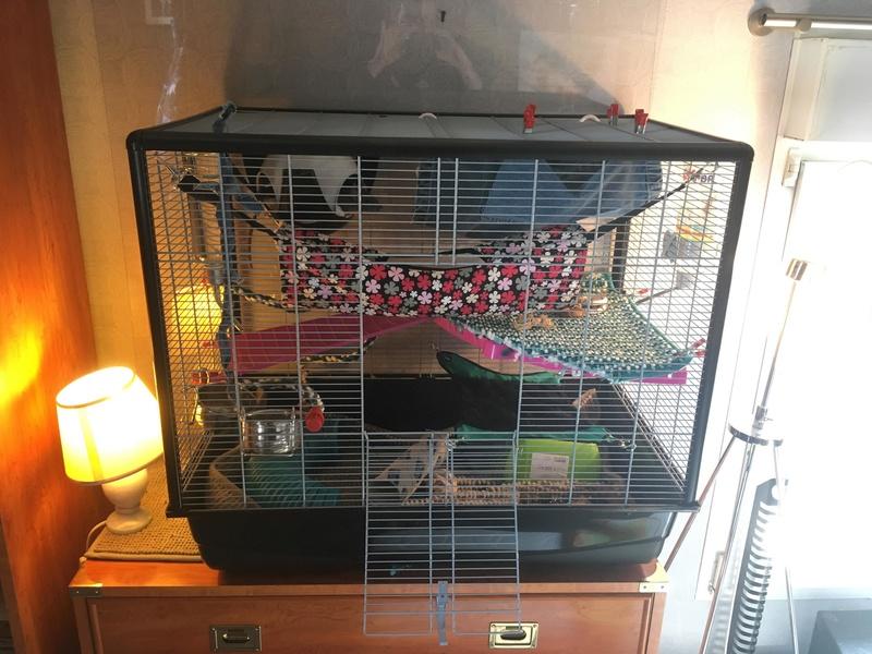 Mon premier set up de cage 28408010