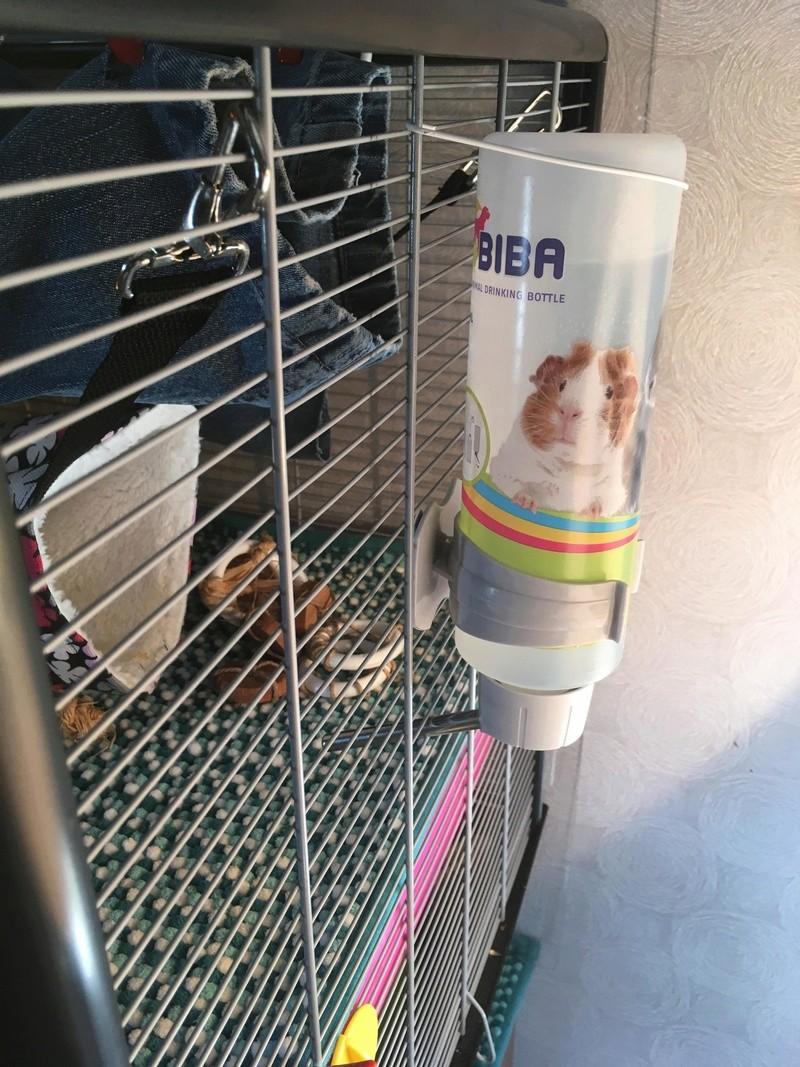 Mon premier set up de cage 28408011