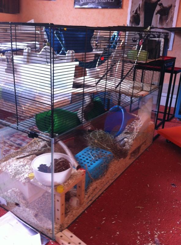 Photos de vos cages - Page 10 Image22