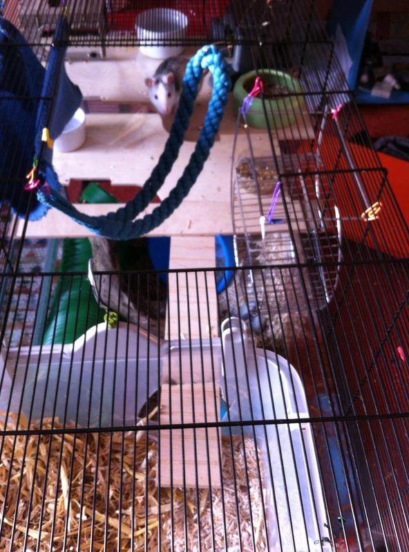 Photos de vos cages - Page 10 Image24