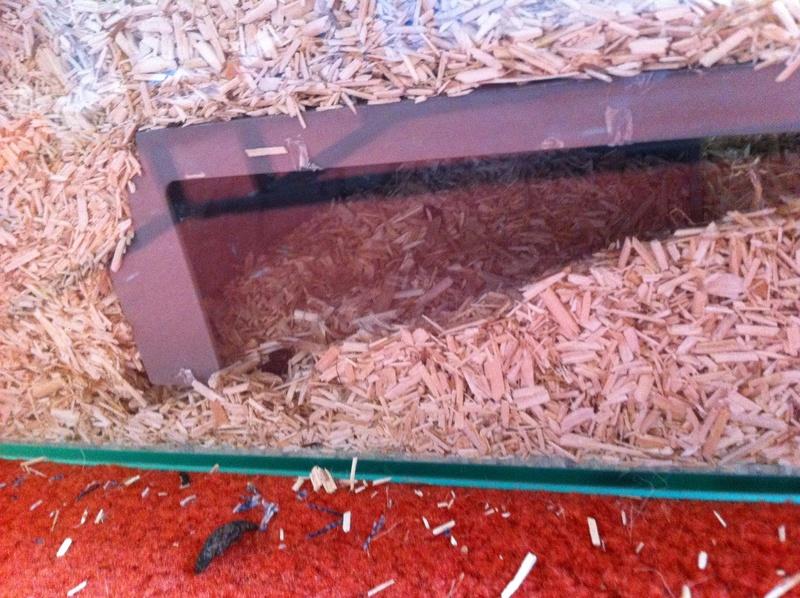 Photos de vos cages - Page 10 Image26