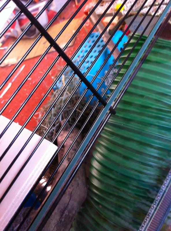 Photos de vos cages - Page 10 Image28