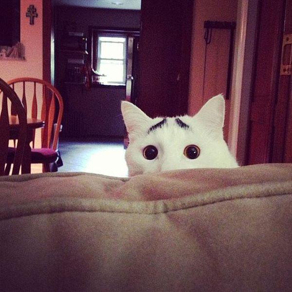 Zavez des chats ?? - Page 2 122