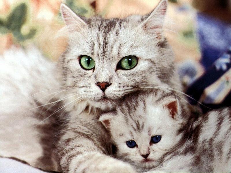 Zavez des chats ?? - Page 2 Cats10