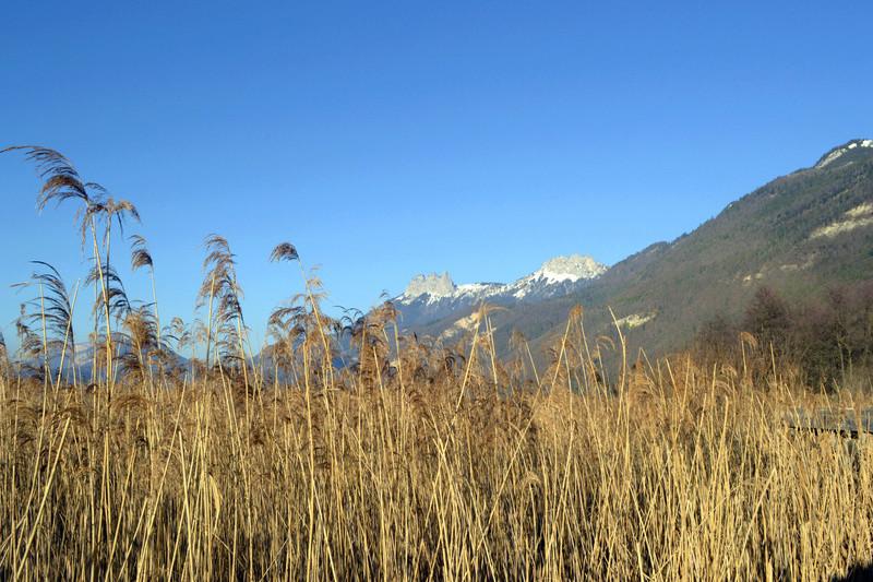 Lac d'Annecy Roseau10