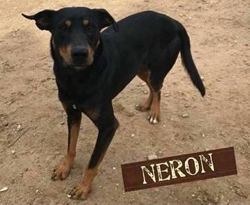 NERON - ES (Raquel) 27337010