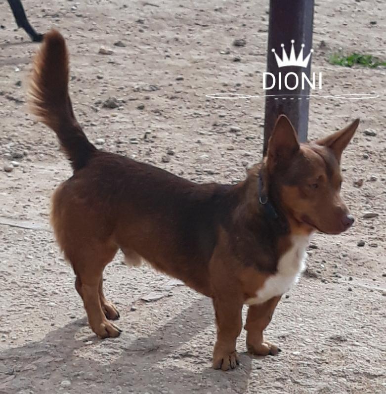 DIONI - ES (Mara) 27540511