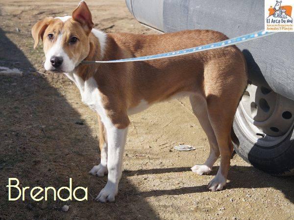 BRENDA (devenue NOUBA) - ES (Sole) 27752011
