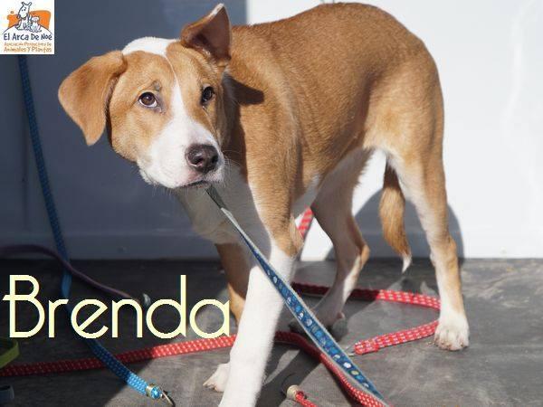 BRENDA (devenue NOUBA) - ES (Sole) 27867111