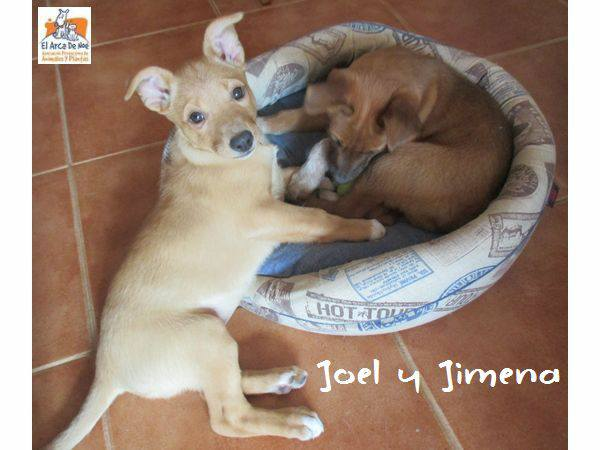 JIMENA - ES (Sole) 28379211