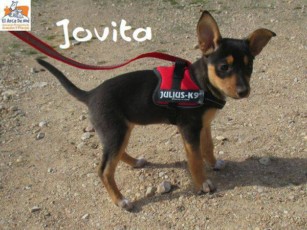JOVITA - ES (Sole) 28379412