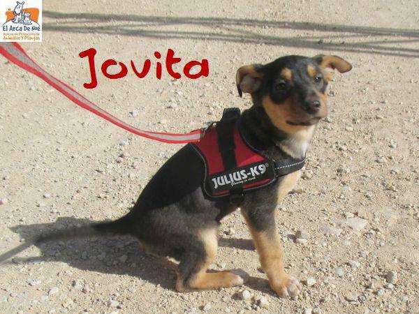JOVITA - ES (Sole) 28575712