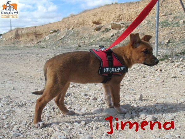 JIMENA - ES (Sole) 28575911
