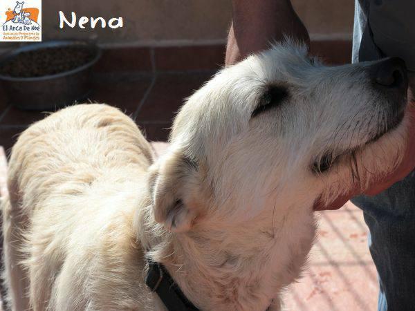 NENA - BLANCHE - ES (Sole) 28576012