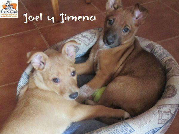 JIMENA - ES (Sole) 28576212