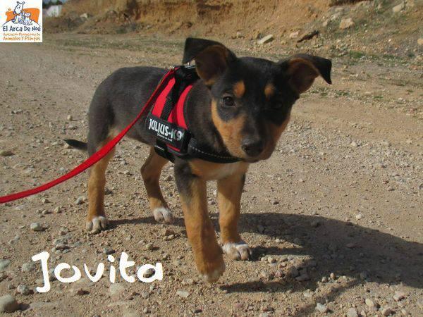 JOVITA - ES (Sole) 28576412