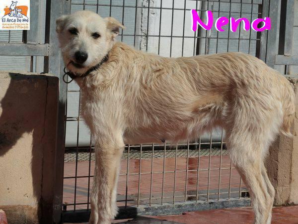 NENA - BLANCHE - ES (Sole) 28661310