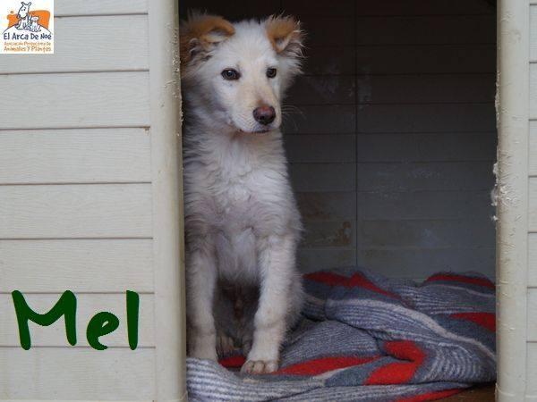 MELL (devenu CARAMEL) - CREME - ES (Sole) 28685111
