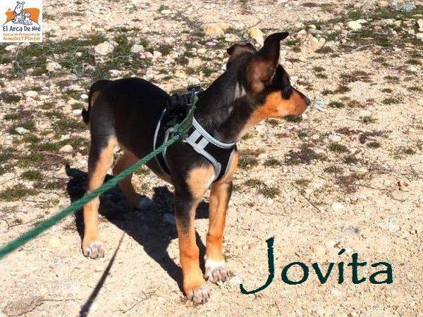 JOVITA - ES (Sole) 29793510