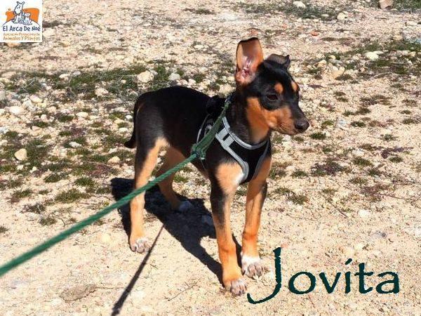 JOVITA - ES (Sole) 30124610