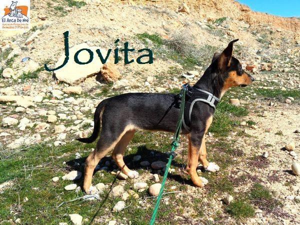 JOVITA - ES (Sole) 30124810