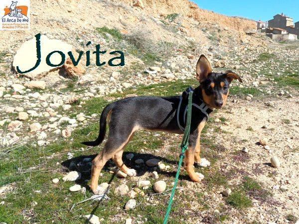 JOVITA - ES (Sole) 30221710