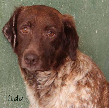 TILDA - ES (Sole) 33207110