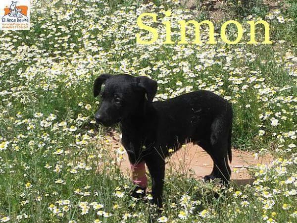 SIMON - NOIR - ES (Sole)  Fb_img62