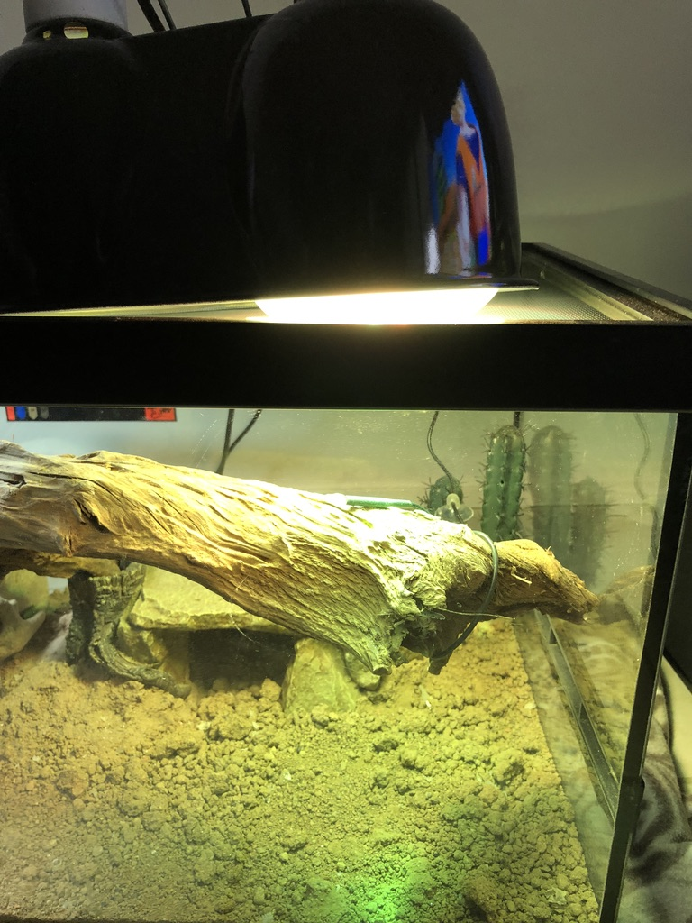 Terrarium de Godzilla Unadju11