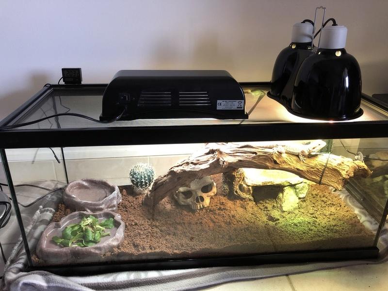 Terrarium de Godzilla Unadju12