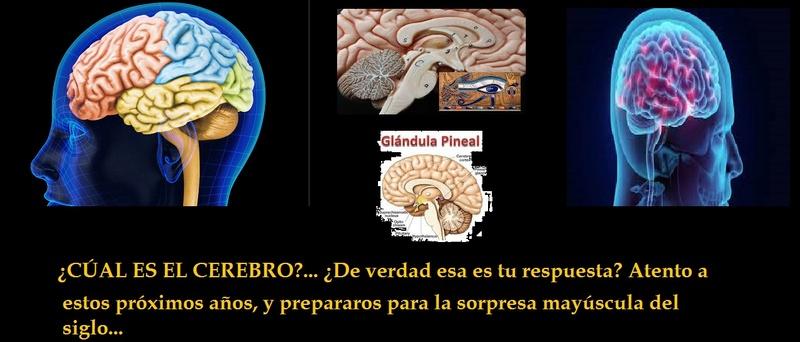 ¿Qué es el cerebro de nuestro ser: El cerebro que creíamos o la glándula pineal? 8f227c10